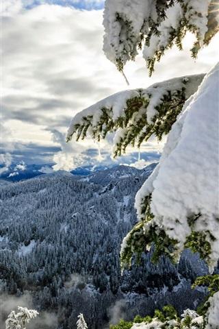 iPhone Wallpaper Okanogan-Wenatchee National Forest, Cascade Range, thick snow, trees, winter