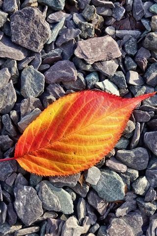 iPhone Wallpaper Red orange leaf, stones