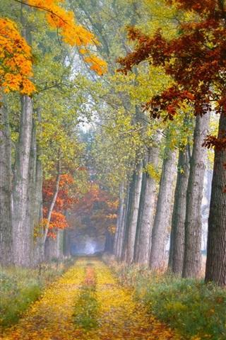 iPhone Wallpaper Road, trees, grass, autumn, fog, morning
