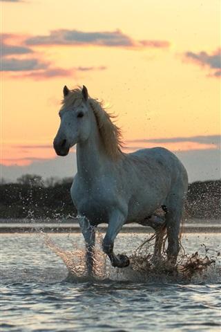 iPhone Wallpaper Three horses run in water