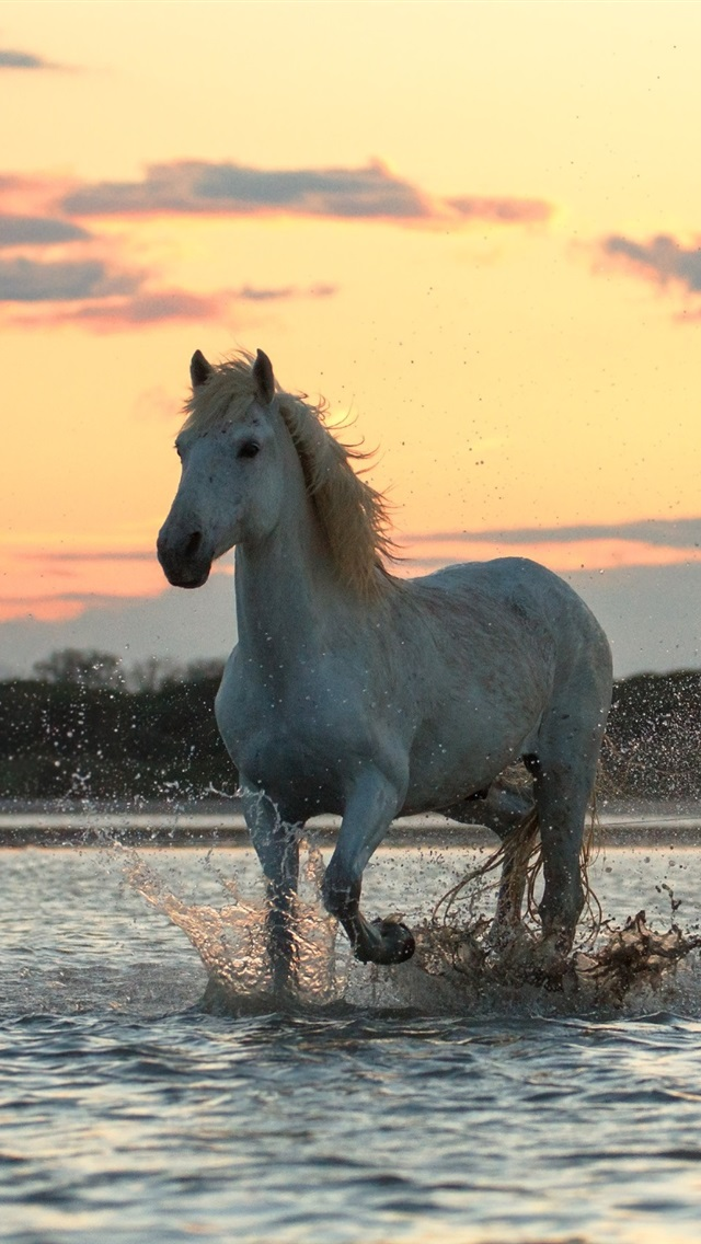 Wallpaper Three Horses Run In Water 2560x1600 Hd Picture Image