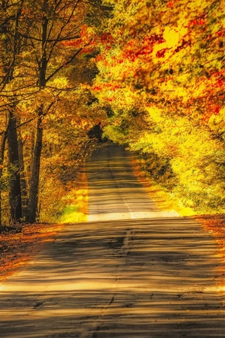 iPhone Wallpaper Trees, road, autumn, yellow leaves