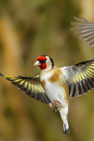iPhone Wallpaper Two birds flying, goldfinch, wings