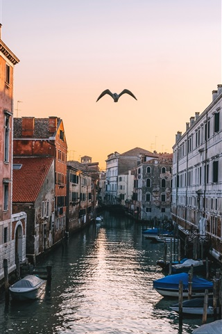 iPhone Wallpaper Venice, Italy, canal, houses, flying bird