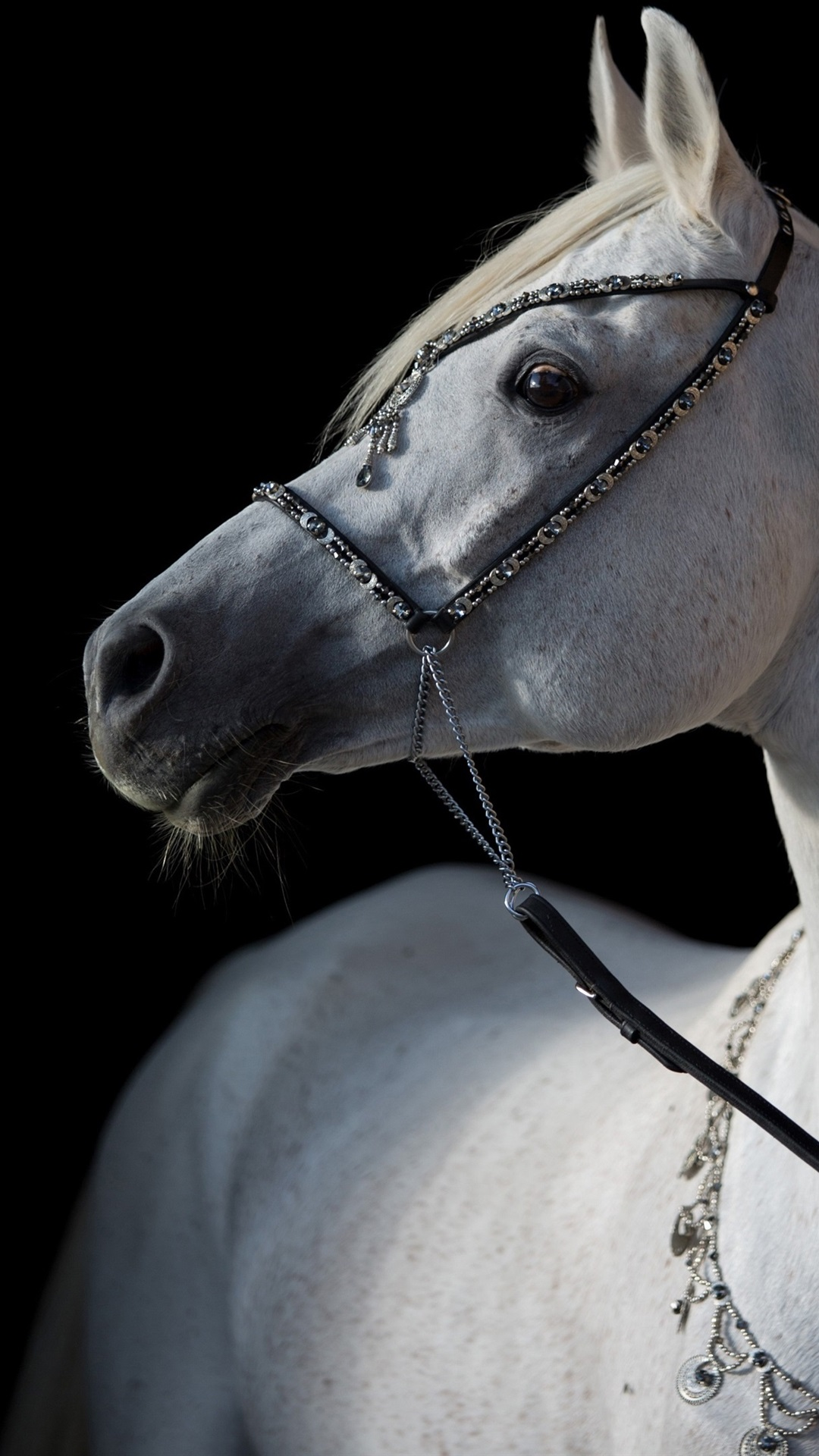 White Horse Black Background 1080x1920 Iphone 8 7 6 6s Plus Wallpaper Background Picture Image