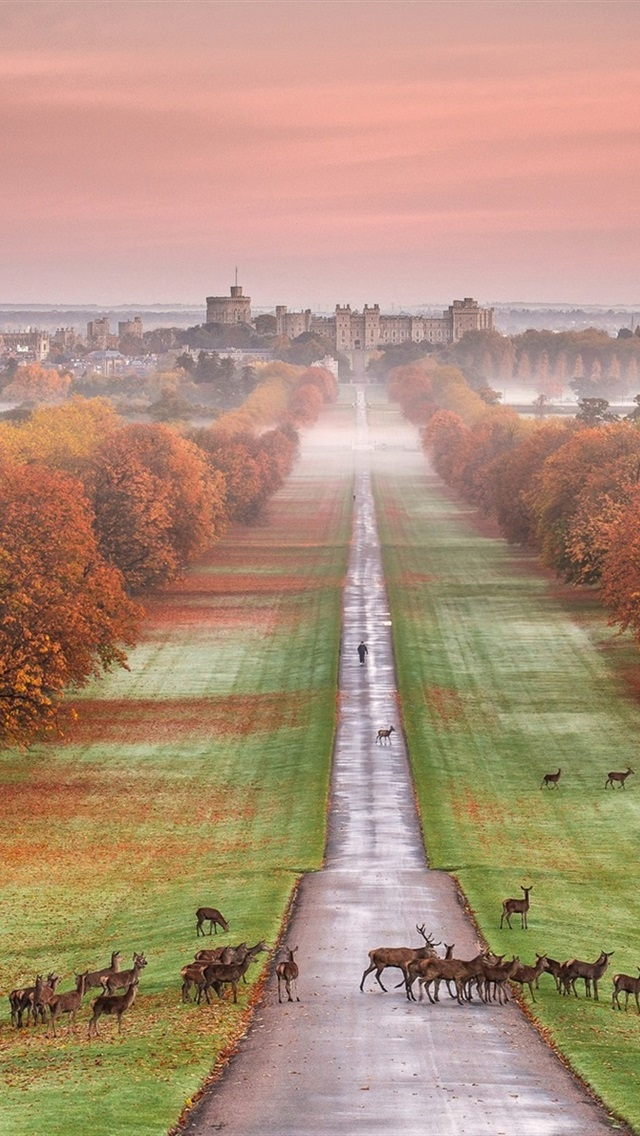 Windsor Castle England Autumn Trees Road Deer Fog