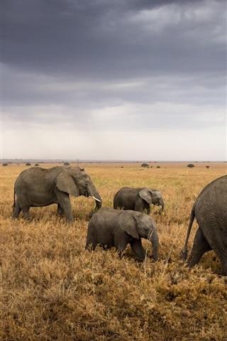 Africa Tanzania Serengeti National Park Grass Elephants
