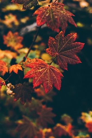 iPhone Wallpaper Autumn, red leaves, bokeh
