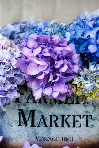 iPhone Wallpaper Beautiful hydrangea, colorful flowers, inflorescence