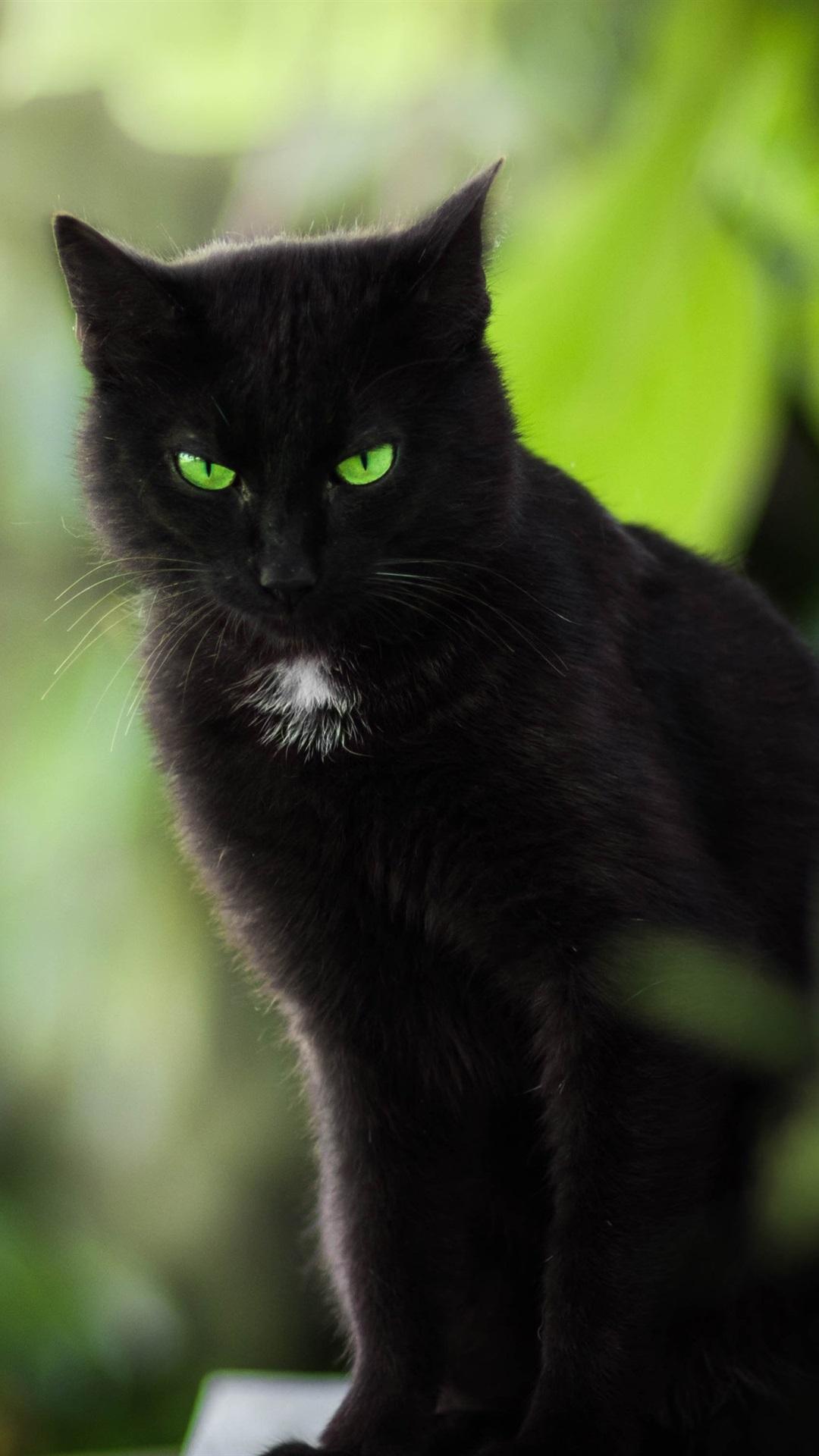 Картинки черные кошки с зелеными глазами, пожеланиями