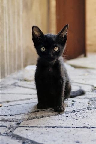 black kitten sit down look ground