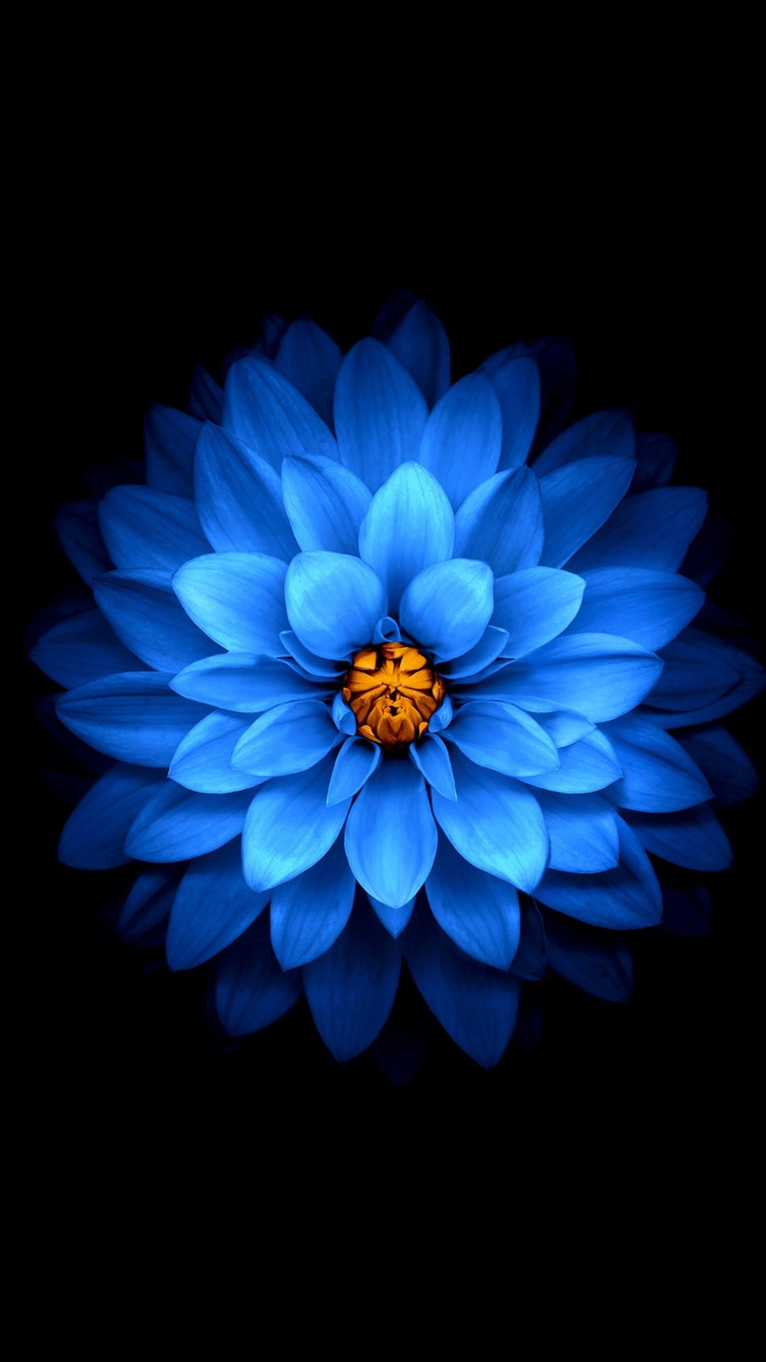 Wallpaper Blue Flower Close Up Black Background 3840x2160