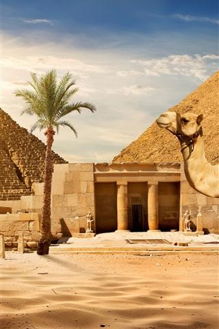 iPhone Wallpaper Cairo, pyramid, camel, sands, palm tree, sun, Egypt