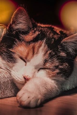 iPhone Wallpaper Cat sleep, glass cup