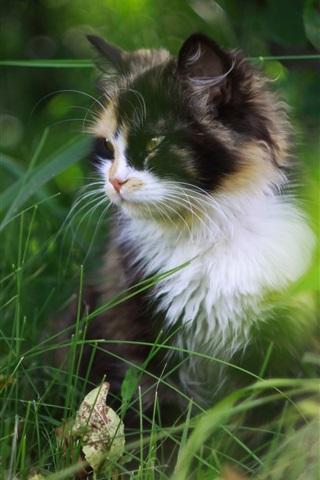 iPhone Wallpaper Cute cat in the grass, furry pet