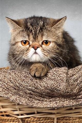 iPhone Wallpaper Cute kitten, basket, scarf