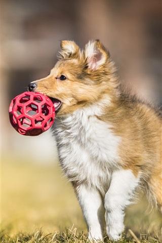 iPhone Wallpaper Dog catch a ball