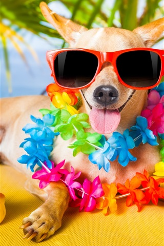 iPhone Wallpaper Funny dog, sunglasses, flowers, toy duck, humor