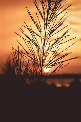 iPhone Wallpaper Grass, sunrise, dawn