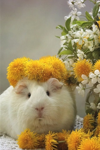 iPhone Wallpaper Guinea pig, dandelions, cherry flowers
