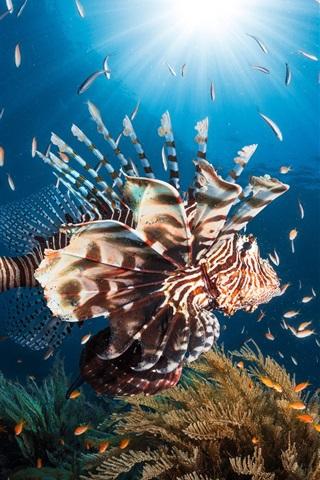 iPhone Wallpaper Lionfish, blue sea, fish, sun