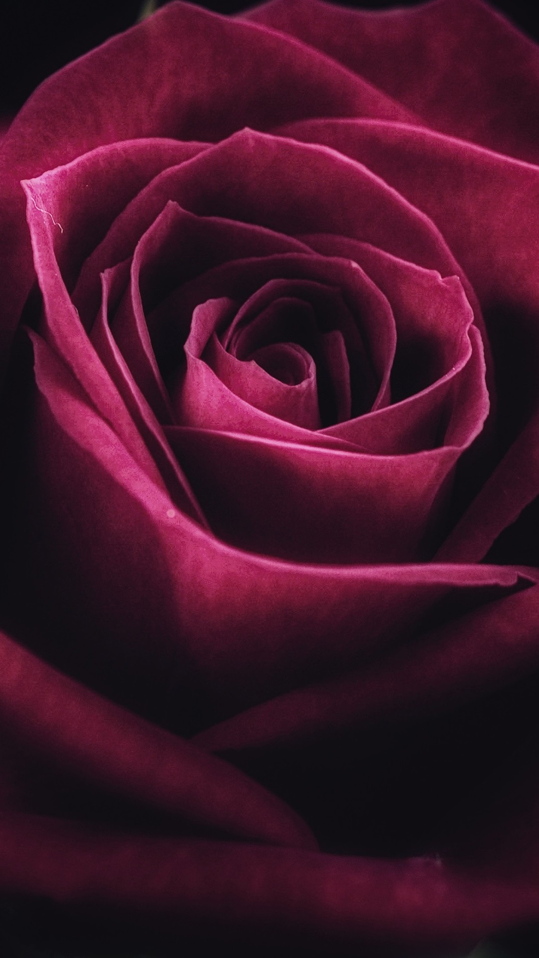 Red Rose Close Up Petals Flower 1080x1920 Iphone 8 7 6 6s