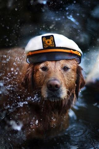 iPhone Wallpaper Retriever, dog, cap, water, boat, like a captain