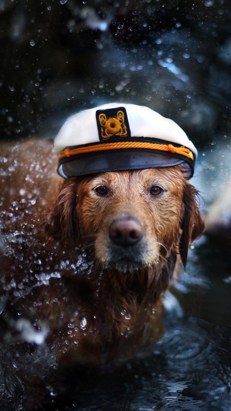 Papéis de Parede Retriever, cão, boné, água, barco, como um capitão ... 3688ca6d8d