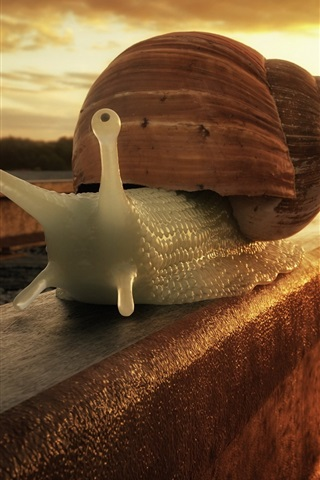 iPhone Wallpaper Snail walk on railway tracks
