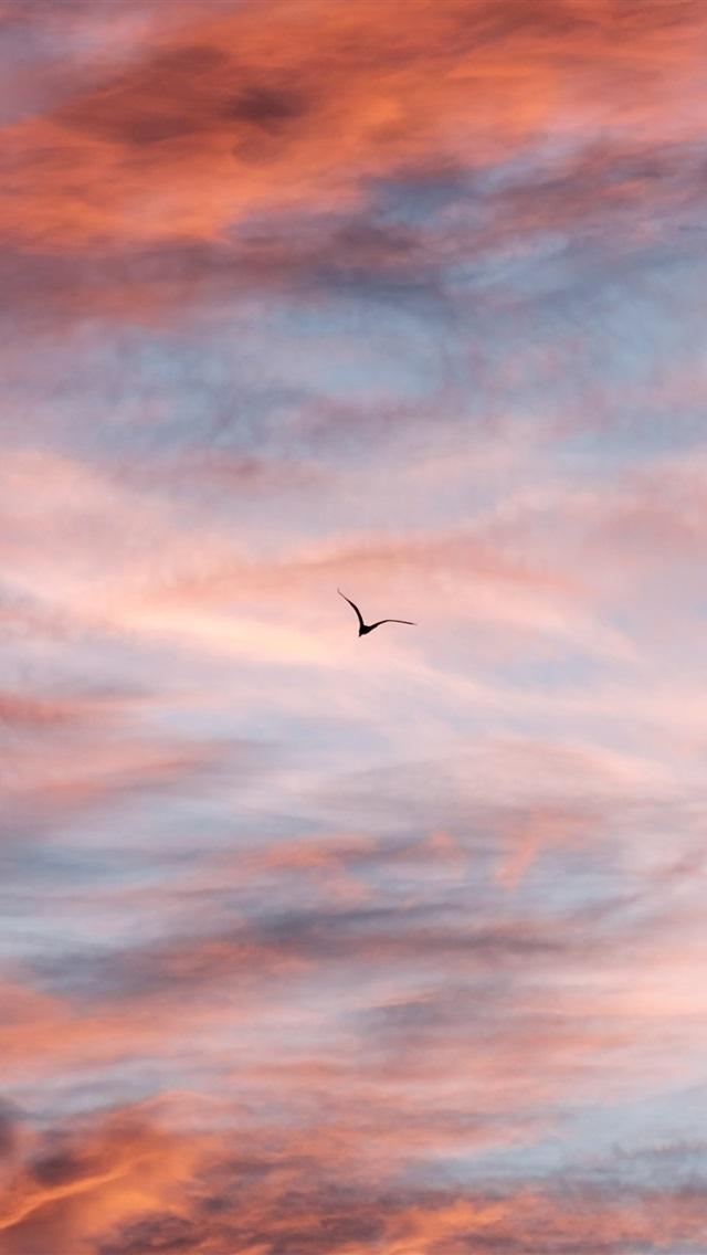 壁纸 夕阳的天空,云,飞行鸟 3840x2160 Uhd 4k 高清壁纸 图片 照片