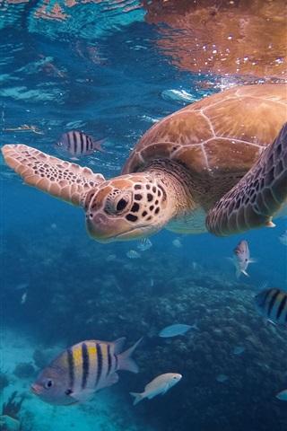iPhone Papéis de Parede Tartaruga e peixe, subaquática, mar