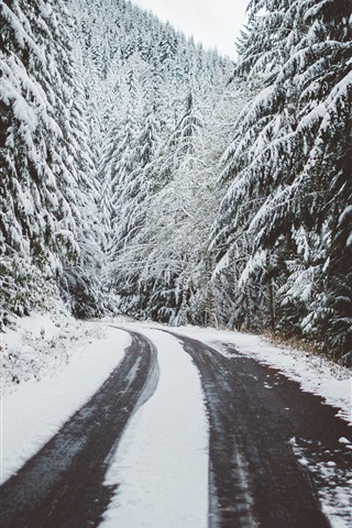 iPhone Wallpaper Winter, trees, snow, road