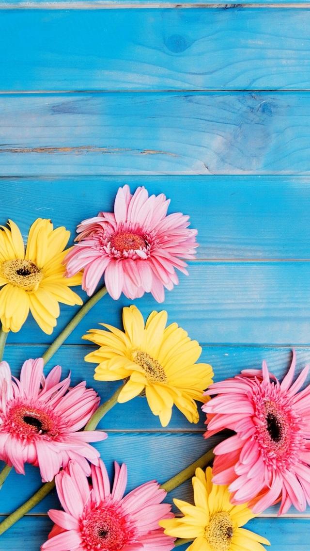 Fondos de pantalla flores amarillas y rosadas del gerbera for Fondo de pantalla 4k para iphone