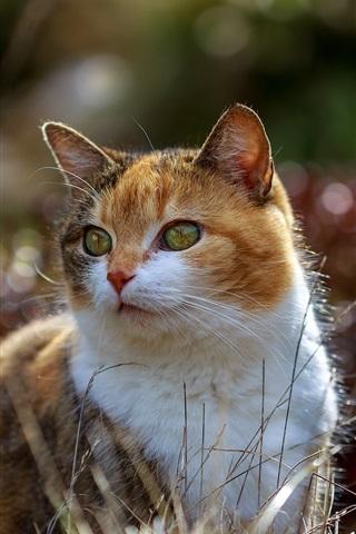 Cute Cat Summer 640x1136 Iphone 5 5s 5c Se Wallpaper Background