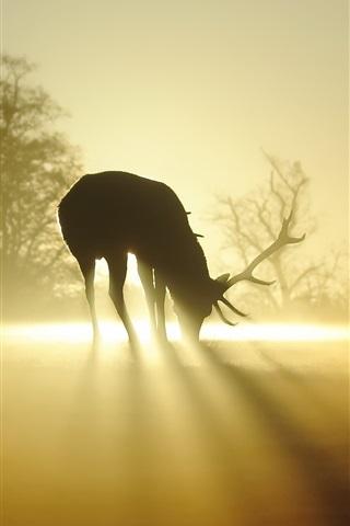 iPhone Wallpaper Deer, silhouette, fog, sun rays, morning