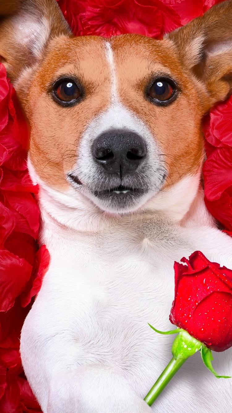 с днем рождения картинки цветы и собаки единственный представитель отряда