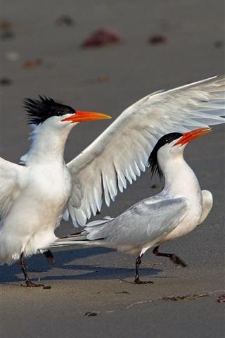 iPhone Wallpaper Elegant tern, wings, birds