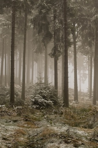 iPhone Wallpaper Forest, trees, fog, frost, cold