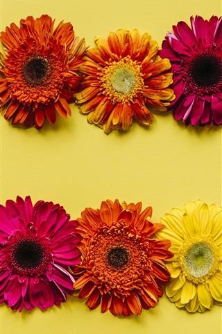 iPhone Wallpaper Gerbera flowers background, yellow, red, orange