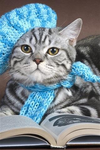 iPhone Wallpaper Gray cat read book, cap, scarf