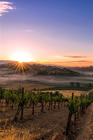 iPhone Wallpaper Italy, Tuscany, plantation, sun rays, morning, fog