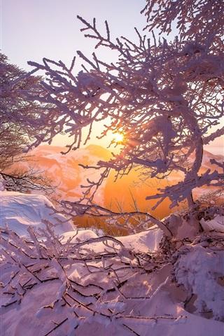 iPhone Wallpaper Jura mountains, snow, winter, dawn, sunrise, trees, Switzerland