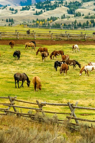 iPhone Wallpaper Many horses, grass, fence