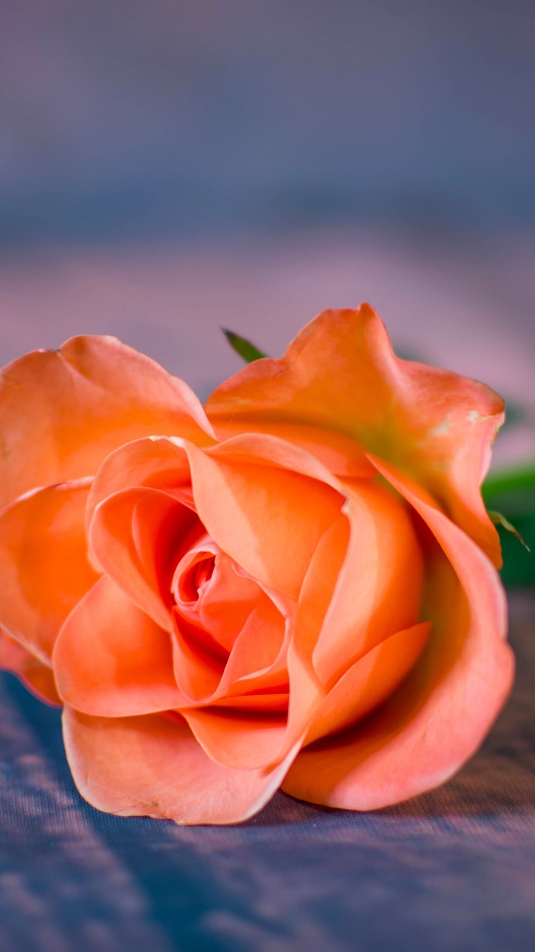 Orange Rose Close Up Bokeh 1080x1920 Iphone 8 7 6 6s Plus Wallpaper Background Picture Image