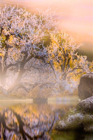iPhone Wallpaper Pelican, stones, pond, trees, morning