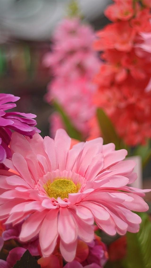 ピンクの花 花びら ガーベラ 640x1136 Iphone 5 5s 5c Se 壁紙 背景 画像