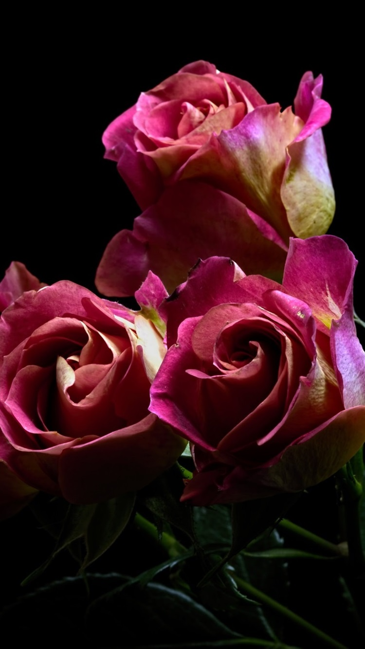 Pink Roses Bouquet Flowers Black Background 750x1334 Iphone 8 7 6 6s Wallpaper Background Picture Image