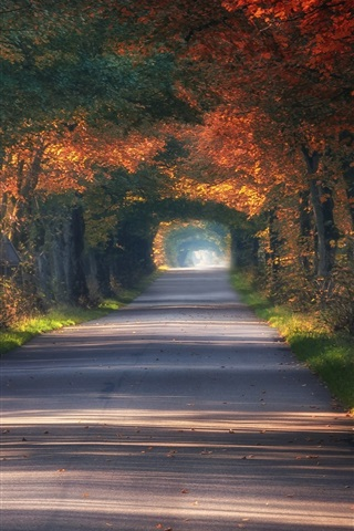 iPhone Wallpaper Poland, tunnel, road, trees, autumn