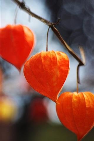 iPhone Wallpaper Red physalis lanterns, plants
