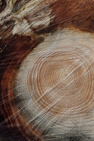 iPhone Wallpaper Stump, rings
